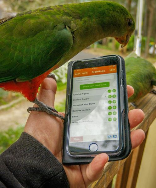 Picture showing Birdlife App with Bird looking at screen