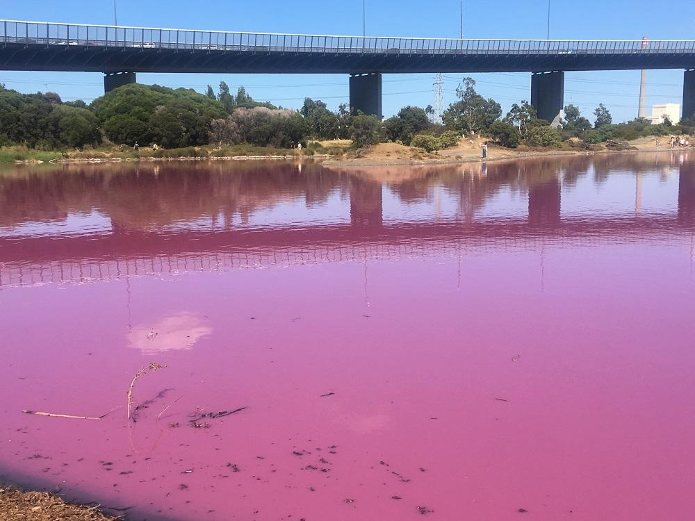 The Pink Lake at Westgate Par